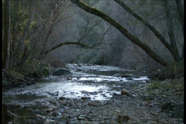 Creek in Amador County