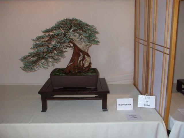 Larry White's award winning tree